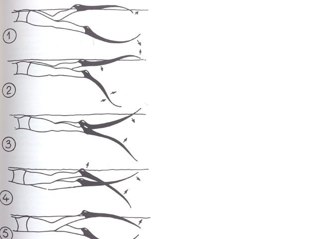 pedilla - Προετοιμασία για το υποβρύχιο ψάρεμα